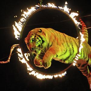Цирки Туринской Слободы