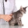 Ветеринарные клиники в Туринской Слободе